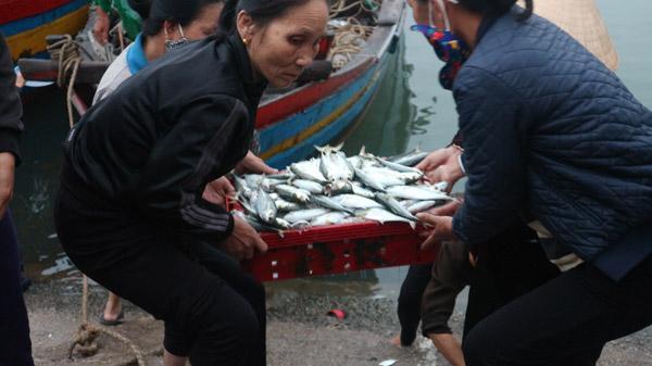 Lộc biển đến với ngư dân Lộc Hà, Hà Tĩnh