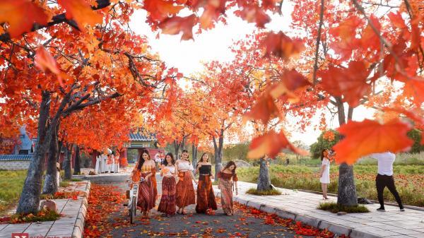 """Giới trẻ Hà Thành đổ xô """"check in"""" tại con đường lá đỏ lãng mạn như phim Hàn"""
