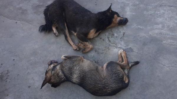 Quảng Bình: Nửa đêm kiểm tra hành chính người đi xe máy, phát hiện chó bị kích điện