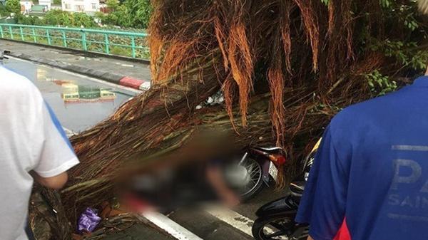 Nữ sinh chết do cây bị cưa đổ trúng người