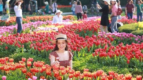"""Xuất hiện vườn hoa Tulip cách Hà Nam không xa, """"free vé"""" tha hồ sống ảo vào dịp Tết 2020"""