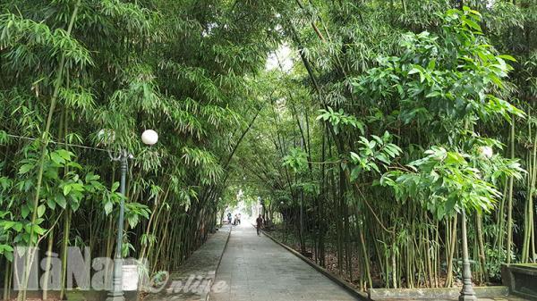 Hà Nam: Vườn trúc truyền kỳ qua 10 thế kỷ, không dám cho trâu đến gần
