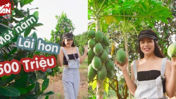 Hết nông trại hàng ngàn mét vuông, người đẹp miền Tây Trà Ngọc Hằng lại khoe vườn trái cây 15 tỷ