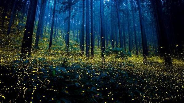 Lạc vào cánh đom đóm ở Cúc Phương: Thiên đường ánh sáng là đây chứ đâu!