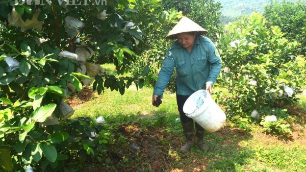 Chuyện lạ Nghệ An: Nông dân nghĩ cách chống hạn không cần nước