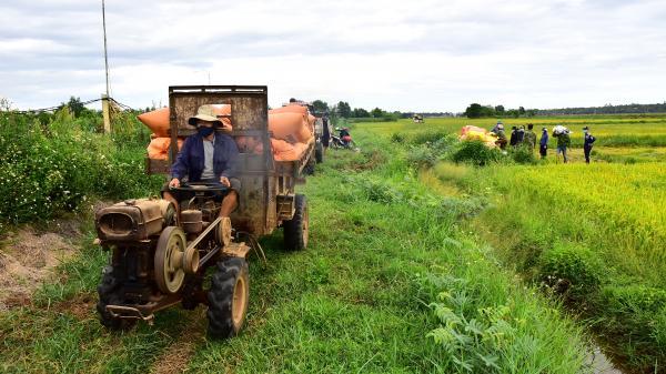Quảng Trị: Gặt lúa cho người dân trong khu vực phong tỏa tạm thời