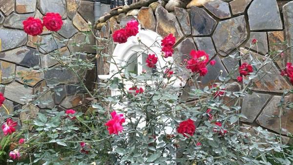 Trong khuôn viên trồng nhiều loại hoa và cây cảnh.